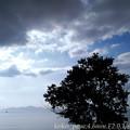 琵琶湖:浜の木一本(スマホ撮り)