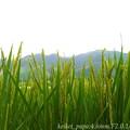 湖西の梅雨明け(スマホ撮り)
