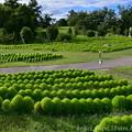 コキアグリーン園全景
